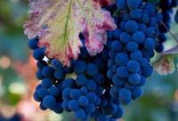茄子蓝莓紫葡萄 7款紫色抗老养颜食物