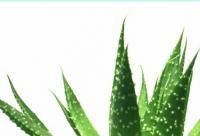 DIY低成本补水面膜 修复晒后肌肤